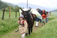 L'âne, le lama et les onze enfants