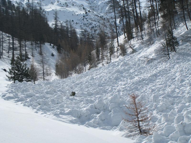 Printemps 2008 au dessus de Briançon : même en forêt le risque d'être emporté par une avalanche existe !