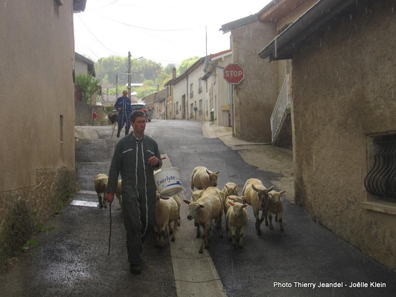 """Une manif de moutons dans Bouxières. On pouvait lire sur certaines pancartes """"Marre de se faire tondre !"""""""